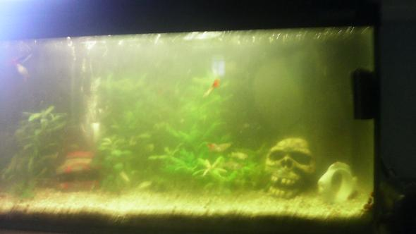 mein aquariumwasser ist sehr tr be geworden aquarium. Black Bedroom Furniture Sets. Home Design Ideas