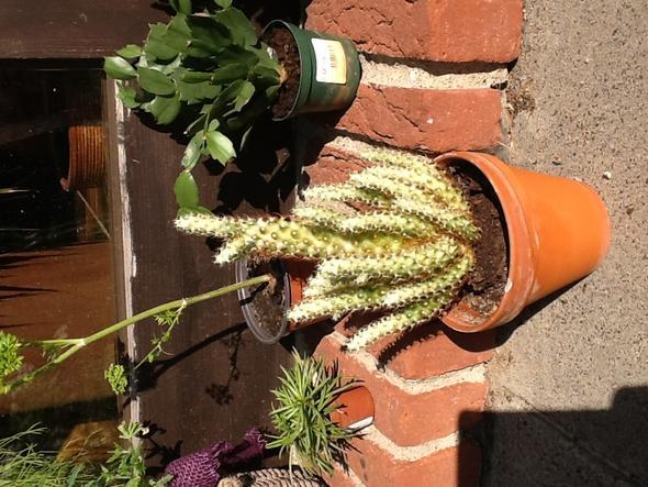 mein kaktus wird hell bleicht aus was kann ich tun. Black Bedroom Furniture Sets. Home Design Ideas