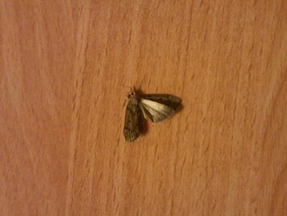 motten alarm die motten m ssen weg ungeziefer insekten textilien. Black Bedroom Furniture Sets. Home Design Ideas