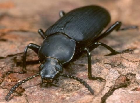 problem mit k fern insekten schutz. Black Bedroom Furniture Sets. Home Design Ideas