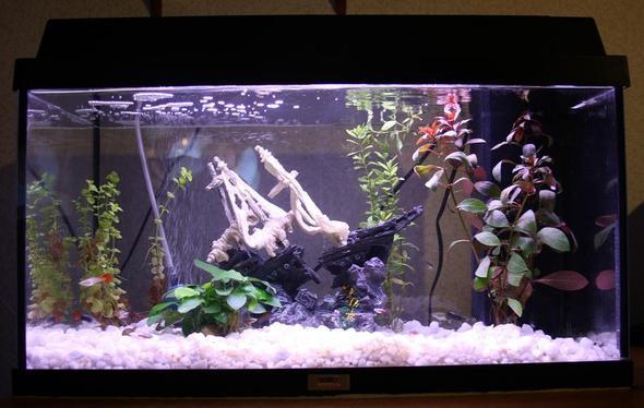 sprudelstein aquarium fische. Black Bedroom Furniture Sets. Home Design Ideas