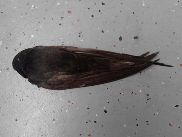 tote tiere auf dem eigenen balkon tot vogel. Black Bedroom Furniture Sets. Home Design Ideas