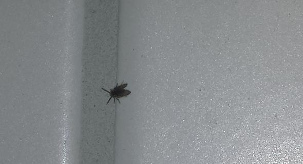 berall kleine fliegen oder k fer insekten k che. Black Bedroom Furniture Sets. Home Design Ideas