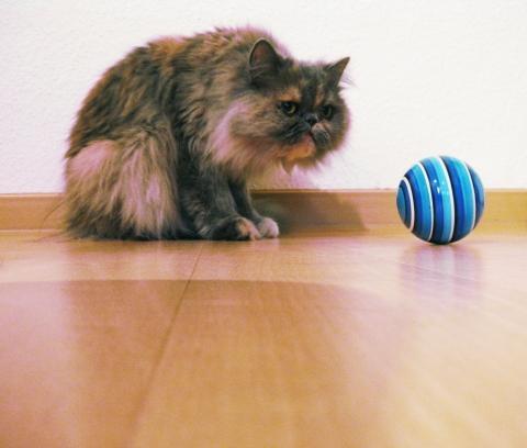 Katze leckt mich Warum? - Katzen Forum
