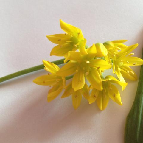 was ist das f r eine gelbe pflanze blatt bio schule. Black Bedroom Furniture Sets. Home Design Ideas