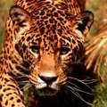 Das ist ein Gepard...