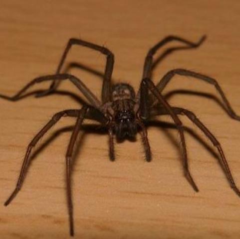 welche spinne ist das siehe bild ist sie giftig spinnen. Black Bedroom Furniture Sets. Home Design Ideas