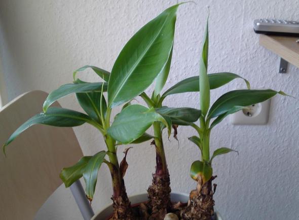 wer kennt den namen dieser pflanze m chte sie gerne. Black Bedroom Furniture Sets. Home Design Ideas