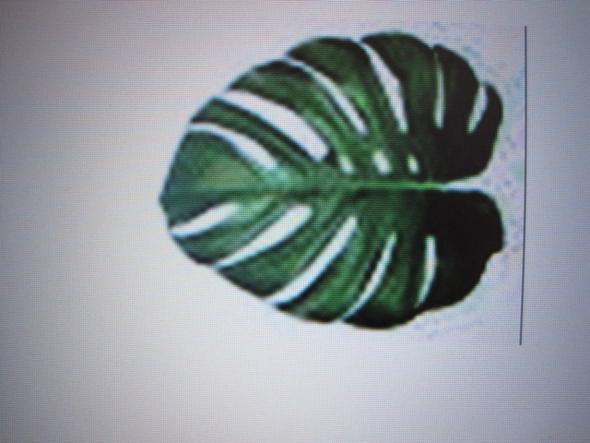 Wie heißt die pflanze mit solchen blättern