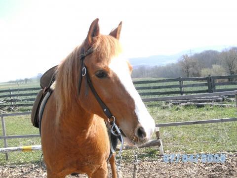 wie hoch kann ich max mit diesem pony springen springreiten pferde reiten. Black Bedroom Furniture Sets. Home Design Ideas