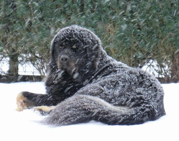 wie lange kann ein gro er hund unbeschadet im garten seine winterfreude genie en wintersport. Black Bedroom Furniture Sets. Home Design Ideas