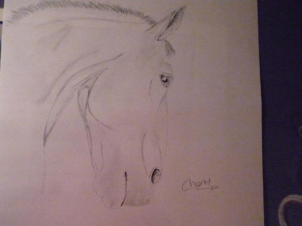 wieviel ist mein selbstgezeichnetes bild wert pferde zeichnen. Black Bedroom Furniture Sets. Home Design Ideas