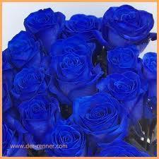 wo in der schweiz kann man blaue rosen kaufen inteniv. Black Bedroom Furniture Sets. Home Design Ideas