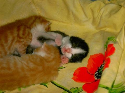 eine Woche alt - (Tiere, Katzen)