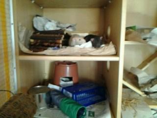ist der rattenk fig gut f r 2 ratten freizeit haustiere k fig. Black Bedroom Furniture Sets. Home Design Ideas