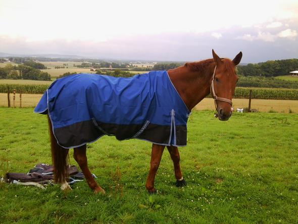 Neue Decke (165 anstatt 155) - (Tiere, Pferde)
