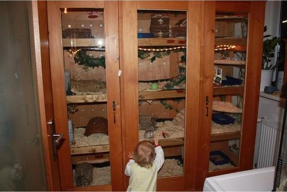 afrikanischer wei bauchigel in zoofachgesch ften igel tiere zoohandlungen. Black Bedroom Furniture Sets. Home Design Ideas
