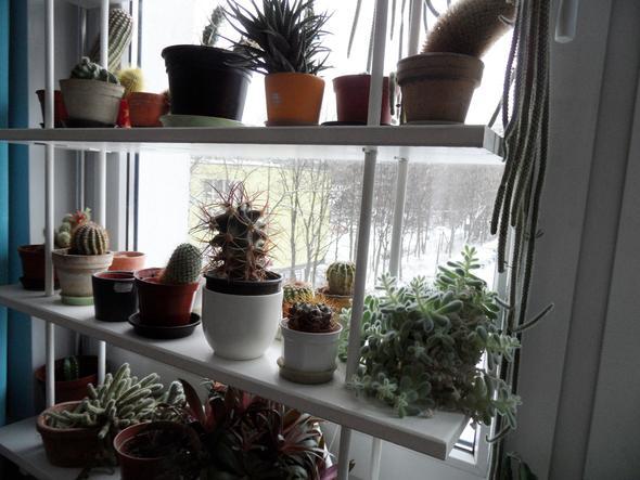 Wie oft muss man Kakteen im Winter gießen? (Pflanzen, Pflege, Pflanzenpflege)
