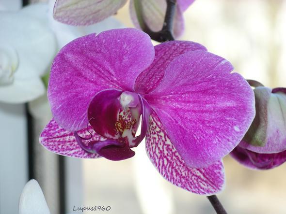 schimmelt meine orchidee o o garten pflanzen botanik. Black Bedroom Furniture Sets. Home Design Ideas