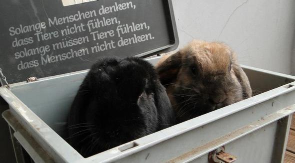 tier sprüche :D (Tiere, Katzen, Kaninchen)