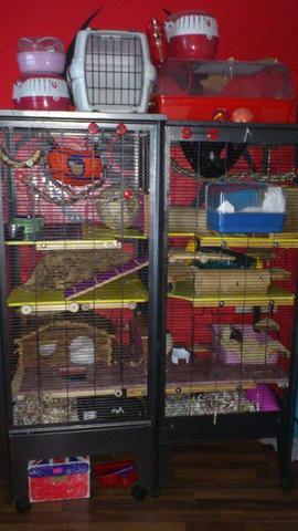 Frontansicht Käfigverbund - (Tiere, Ratten, Käfig)