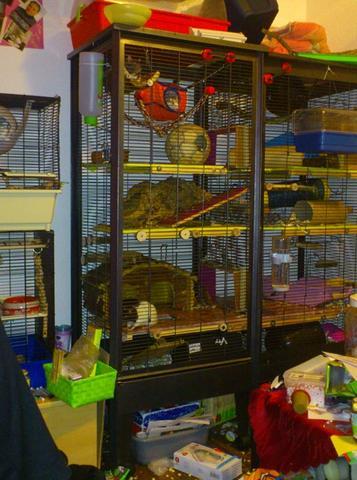 Seitenansicht Käfigverbund mit Durchgänge - (Tiere, Ratten, Käfig)