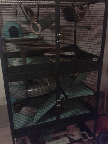 Käfig von meinen Babys - (Tiere, Ratten, Käfig)
