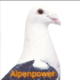 Alpenpower.jimdo.com