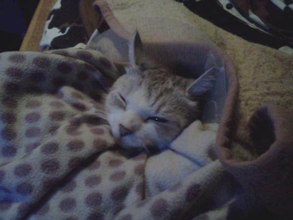 mit kuschel-decke  - (Katze, Katzen, Tierarzt)