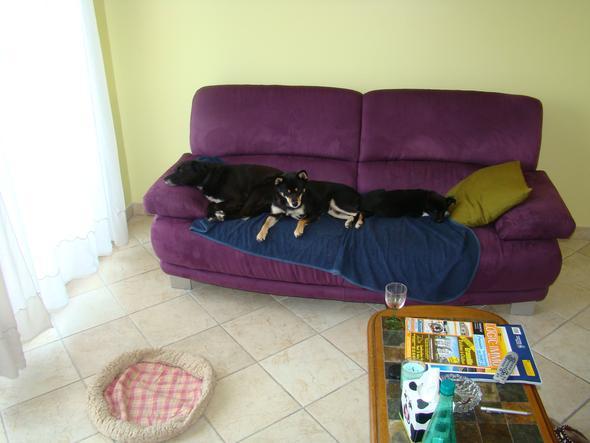 kein platz fuer menschen auf dem sofa - (Hund)