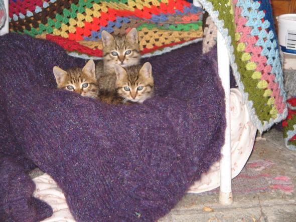 kaetzchen - (Hund, Katze, Katzen)