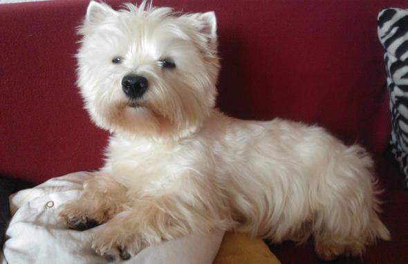 fühlt sich auf dem sofa am wohlsten :-) - (Hund, Hunderecht, gekauft und zurückgefordert)