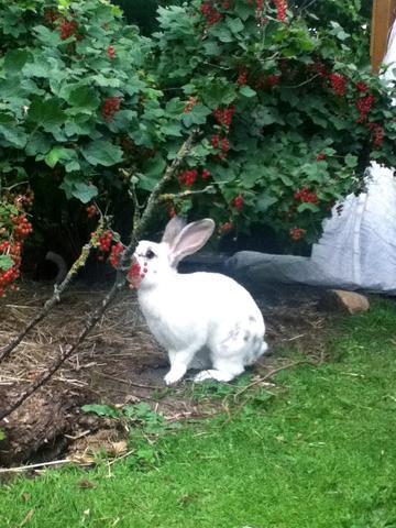 wie halte ich katzen aus unserem garten fern kaninchen schutz nachbarschaft. Black Bedroom Furniture Sets. Home Design Ideas