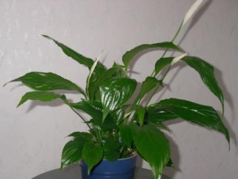 Welche zimmerpflanzen sehn super aus und sind leicht zu for Welche zimmerpflanzen