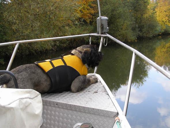 Hundeschwimmweste 1 - (Tiere, Hund)