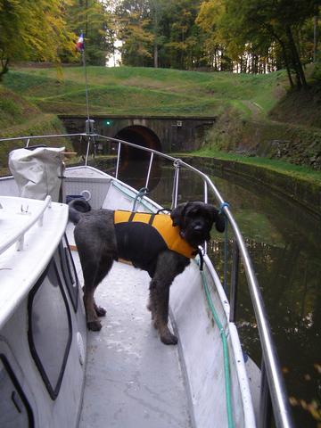 Hundeschwimmweste 2 - (Tiere, Hund)
