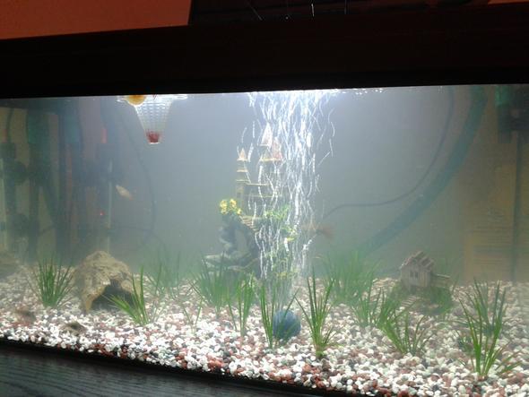 aquarium grünes wasser