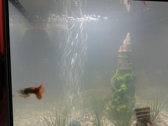 tr bes aquariumwasser wasser aquarium. Black Bedroom Furniture Sets. Home Design Ideas