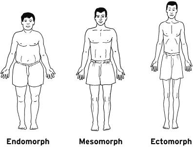 Körpertypen: Ektomorph, Mesomorph, Endomorph - (Sport, Fitness, Stagnation)