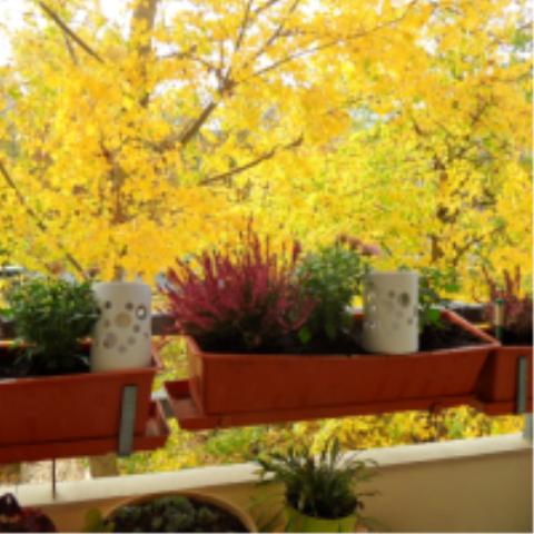 mein Balkon im Herbst - (Garten, Pflanzen, Blumenzwiebeln)