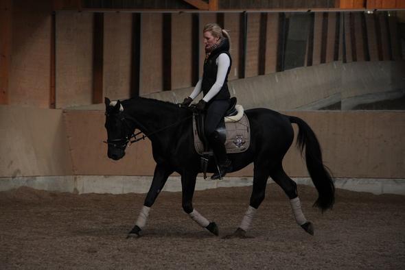 Endmaßpony - (kaufen, Pferde, Pony)
