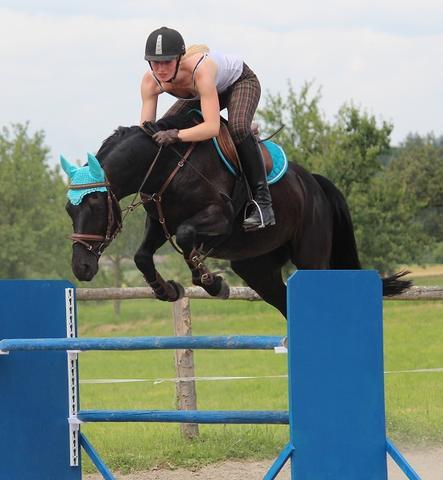 Sprung - (kaufen, Pferde, Pony)