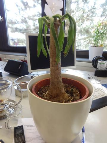 was ist das f r eine pflanze und wie kann sie gerettet werden pflege pflanzen. Black Bedroom Furniture Sets. Home Design Ideas