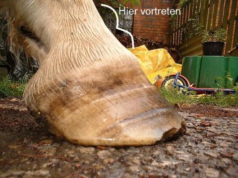 """Hier der Teil wo das Pferd """"getreten"""" werden muss. - (Pferde, reiten)"""