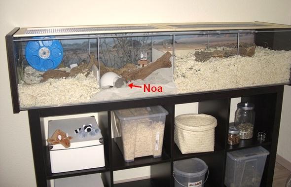 gutes Hamstergehege aus Detolf-Vitrine - (Tiere, Hamster, Zwerghamster)