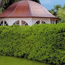 heimische heckenpflanzen tiere haus garten. Black Bedroom Furniture Sets. Home Design Ideas
