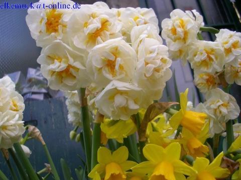 Was Ist Der Unterschied Zwischen Narzisse Und Osterglocke Natur