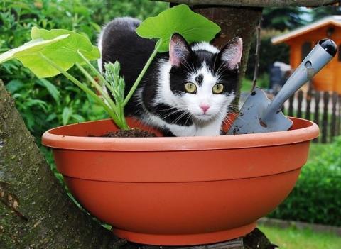 Bilduntertitel eingeben... - (kaufen, Haustiere, Katzen)