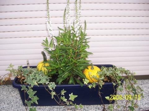 Bilduntertitel eingeben... - (Pflanzen, Balkon, Herbst)