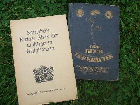 ..Kräuterlis.... - (Gesundheit, Leber, Mariendisteltee)